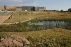 Bomanite Grasscrete is a pervious pavement system that was installed here for the National Renewable Energy Laboratory to provide stormwater management while allowing the native planting in the pond to grow by protecting the root systems within the voids.